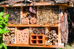 Créer un hôtel à insectes en famille image