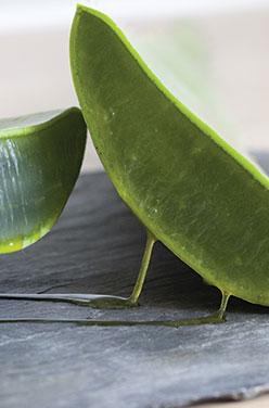 L'Aloe vera, la plante qui fait du bien ! image