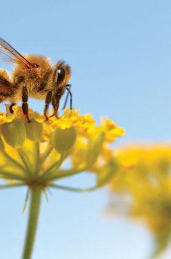 Le miel dans la Bio