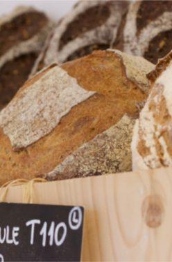 Pourquoi manger son pain complet bio ?