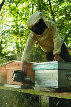 Etre apiculteur