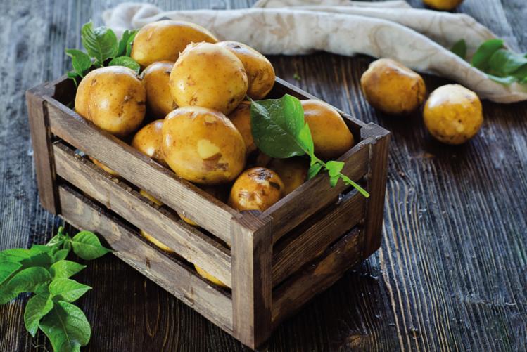 La pomme de terre, le légume le plus consommé dans le monde