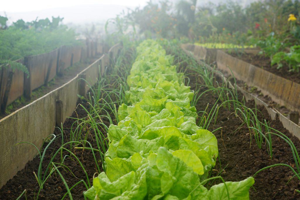 agriculture-vivriere-cuba