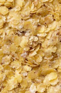 Le germe de blé : un concentré de vitalité