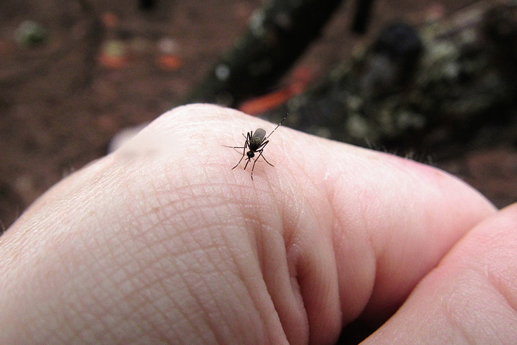 Comment éviter les piqûres d'insectes cet été ?