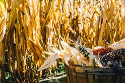 Maisons de la semence : un espace de liberté agricole