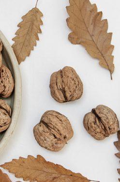 Bienfaits des cerneaux de noix