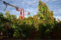 Rencontre de vignerons en bio et biodynamie