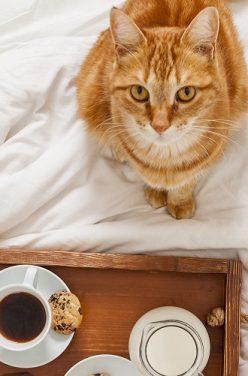 Petits plats équilibrés pour votre chat