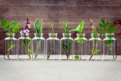Dietaroma & Herbes et Traditions, Experts de la santé au naturel
